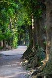 Chemin délimité par des arbres Photo libre de droits