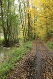 Chemin droit vers la forêt de bois dur photo stock