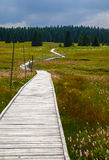 Chemin du marais Photo stock