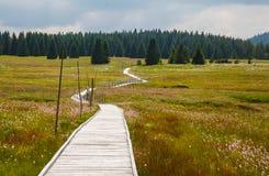 Chemin du marais Image stock