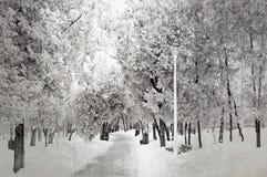Chemin du ` s d'hiver Photos stock