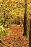 Chemin en automne image libre de droits