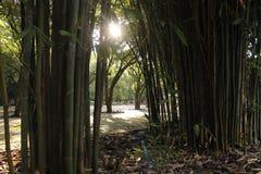Chemin en bambou Photographie stock libre de droits