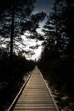 Chemin en bois à l'aube photo libre de droits