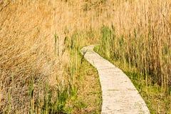 Chemin en bois à travers les roseaux photos stock