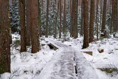 Chemin en bois étendu en parc national de Kemeri en Lettonie image libre de droits