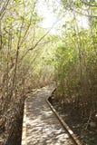 Chemin en bois Images libres de droits
