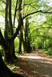 Chemin en bois Photographie stock libre de droits