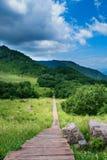 Chemin en bois Photographie stock
