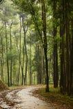 Chemin en bois Photo stock