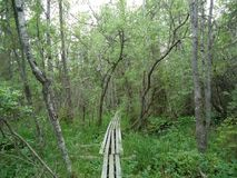 Chemin en bois au milieu des arbres Image libre de droits
