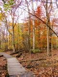 Chemin en bois dans Autumn Colored Leaf Forest Photo libre de droits