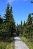 Chemin en bois dans la forêt image libre de droits