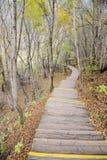 Chemin en bois dans la forêt d'automne Photographie stock libre de droits