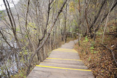 Chemin en bois dans la forêt d'automne Photographie stock