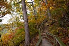 Chemin en bois dans la forêt dans l'automne Photo stock