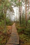Chemin en bois dans le bois d'automne Photos stock