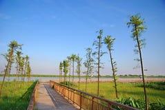 Chemin en bois dans les zones humides Images libres de droits
