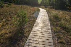 Chemin en bois de forêt photos stock