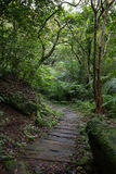 Chemin en bois de planche dans un ivrogne et une forêt verdoyante Photographie stock libre de droits