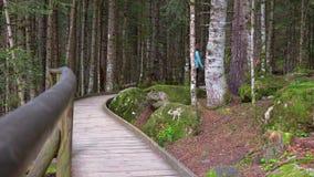 Chemin en bois intéressant de parc national d'Aigüestortes i Estany de Sant Maurici dans une montagne espagnole de Pyrénées banque de vidéos