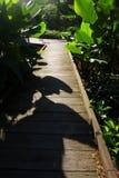 Chemin en bois, jardin tropical, lumière du soleil Photographie stock libre de droits