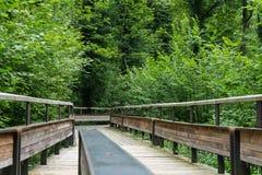 Chemin en bois mystique dans la forêt Photo libre de droits
