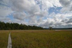 Chemin en bois sur le lac blanc, Estonie Septembre, lumière d'après-midi Photos stock