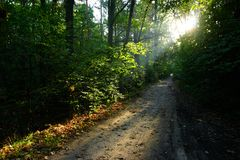 Chemin en forêt d'été Images stock