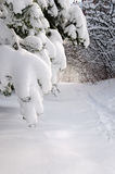 Chemin en forêt de l'hiver Photo stock