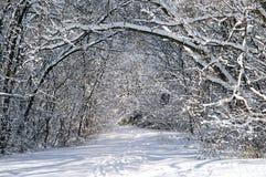 Chemin en forêt de l'hiver photographie stock