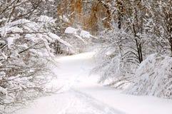 Chemin en forêt de l'hiver images libres de droits