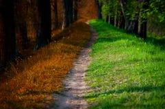 Chemin en forêt magique, été et automne Photo stock