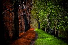 Chemin en forêt magique, été et automne Images libres de droits