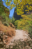 Chemin en gorge Photos stock