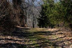 Chemin en hiver en retard Photo libre de droits