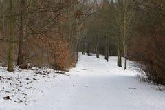 Chemin en hiver Forest Park naturel Photos libres de droits