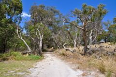 Chemin en nature : Réservation de marécage de Cockburn, Australie occidentale Images stock