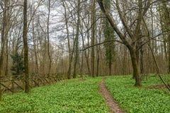 Chemin en parc de Monza Images stock