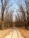 Chemin en parc de ville Images stock
