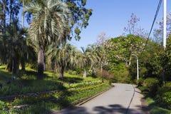 Chemin en parc exotique Images libres de droits