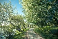 Chemin en parc vert de ressort avec un lac Photographie stock