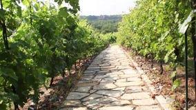 Chemin en pierre à travers le paysage de vignoble en été banque de vidéos