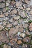 Chemin en pierre avec l'élevage d'herbe Image stock