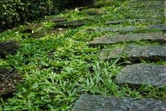 Chemin en pierre dans l'herbe Photos libres de droits