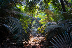 Chemin en pierre dans la jungle avec la lumière du soleil par le feuillage luxuriant, scène naturelle photographie stock