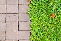 Chemin en pierre de jardin avec l'élevage d'herbe Photo stock