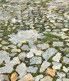 Chemin en pierre de jardin avec l'herbe grandissant entre les pierres Image libre de droits