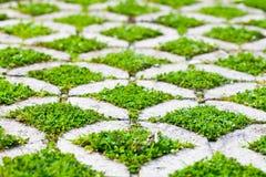 Chemin en pierre de promenade de bloc en parc avec l'herbe verte Image stock