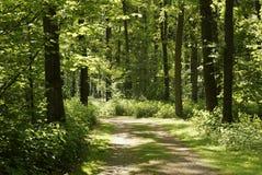 Chemin ensoleillé Image stock